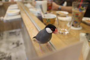 シェ・ワゾー鳥カフェお茶会の時の写真