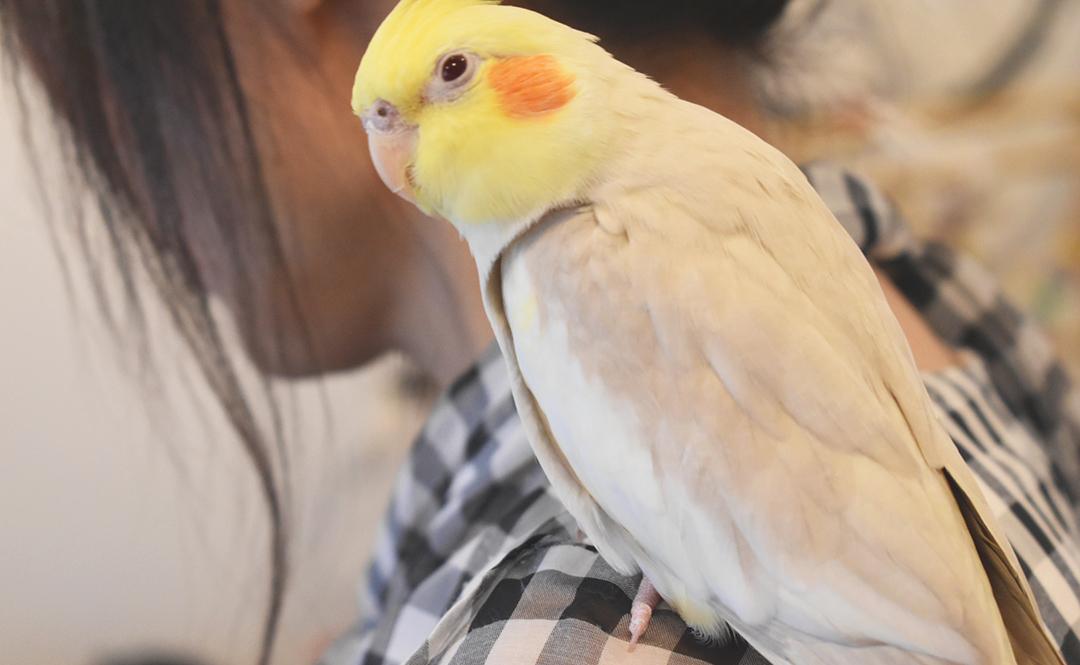 NPO法人シェ・ワゾー鳥のいえ ぽむちゃん写真