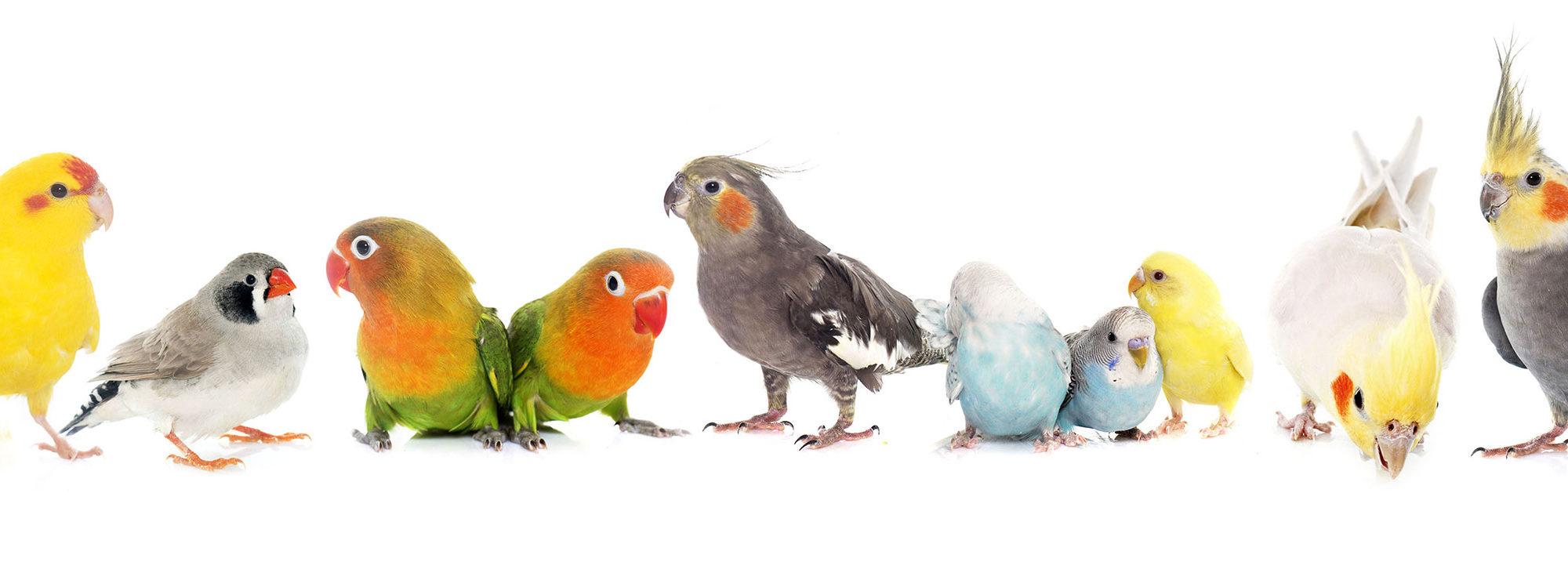 シェ・ワゾー鳥のいえイベント